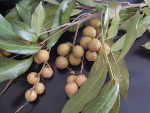 chua bao thang-4