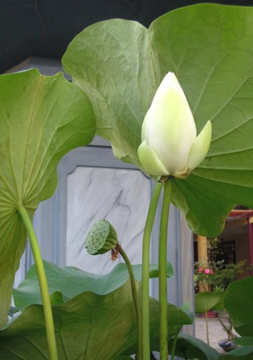 chua bao thang-5