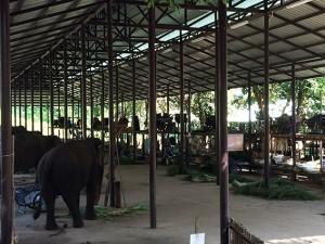清潔な象舎