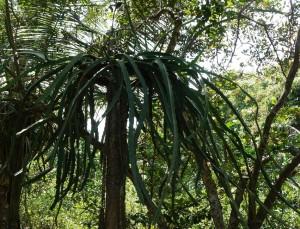 さて、これは何の木?